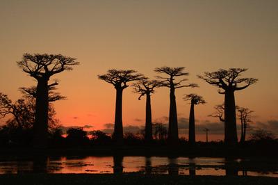Baobab101